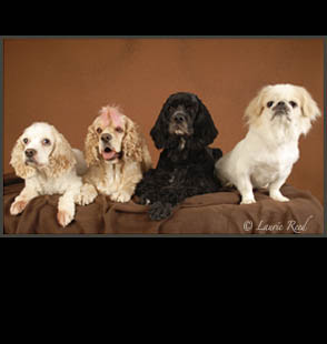 Dogs Veterinarian Photography