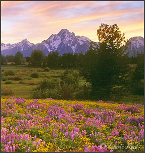 Tetons Wyoming Landscape Photography Art